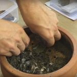 Argovia: De monedas y lucernas